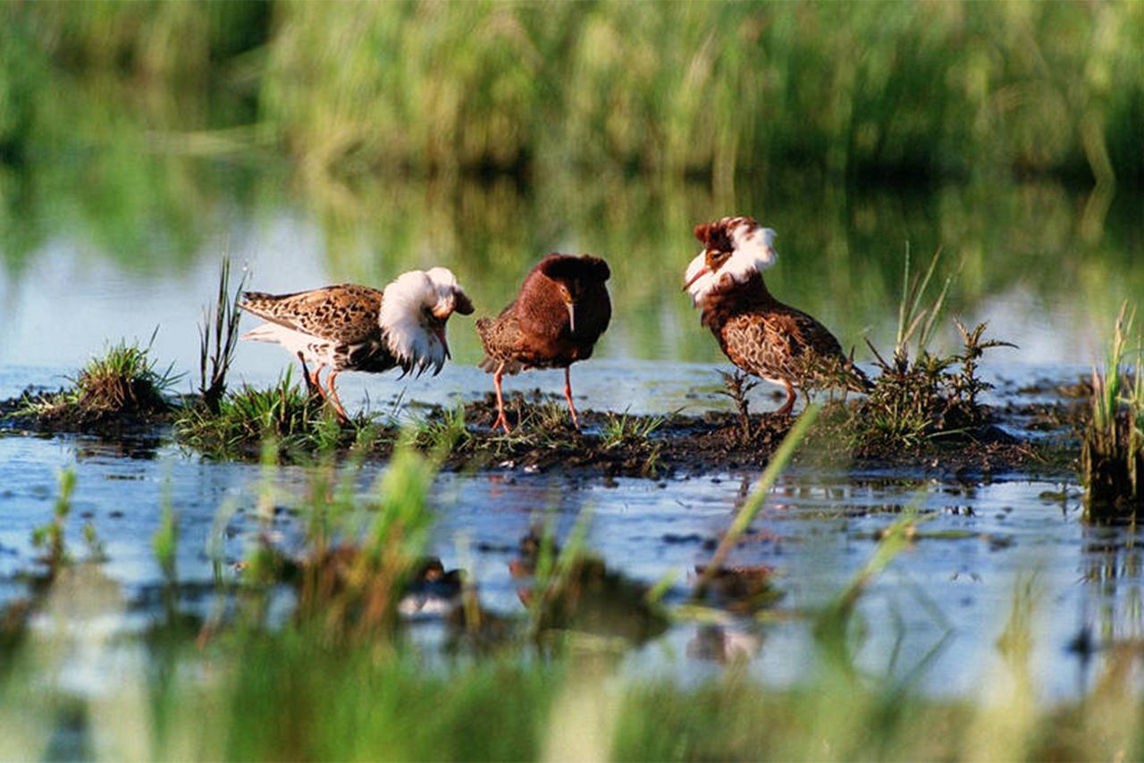 Trois oiseaux au bord d'un plan d'eau