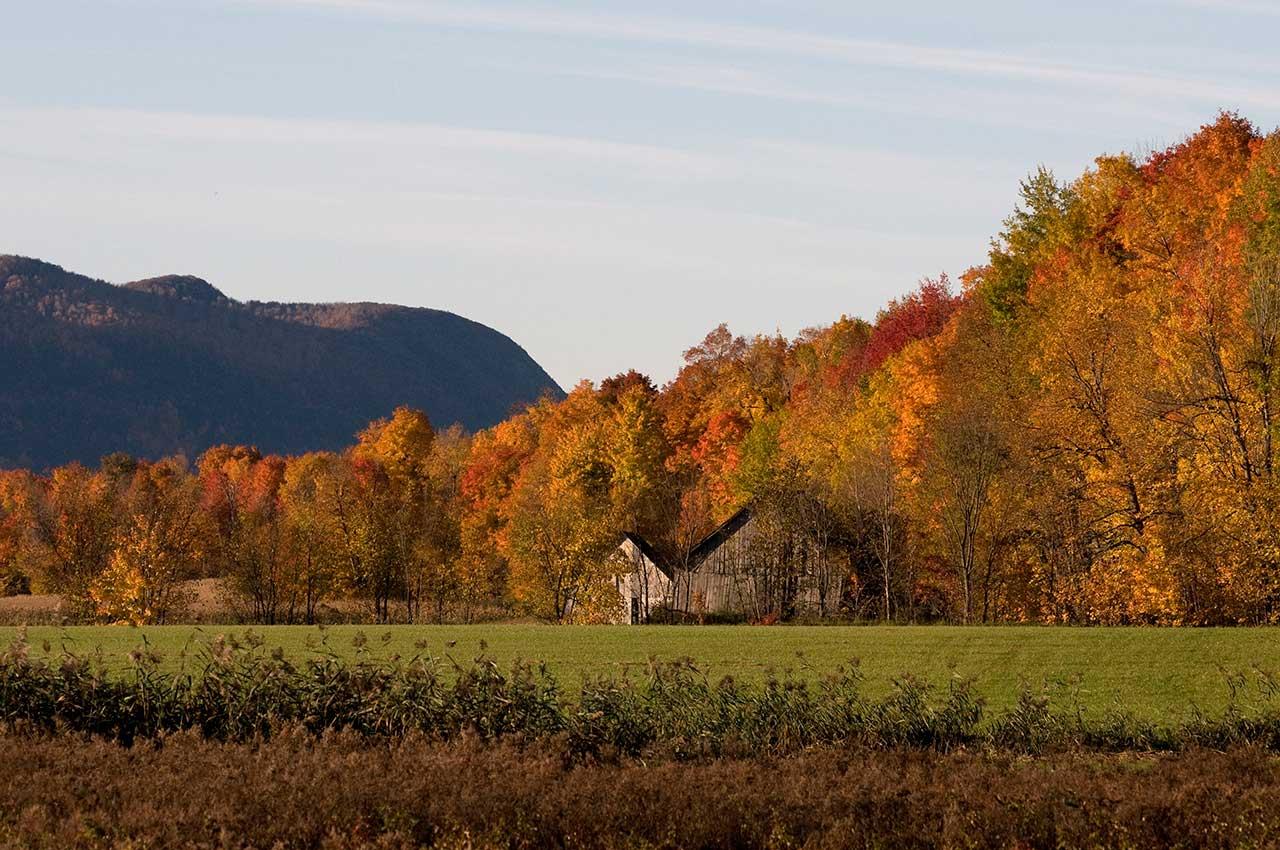 Vue sur la limite entre les boisés et les champs agricoles en automne, vue sur le mont Saint-Hilaire