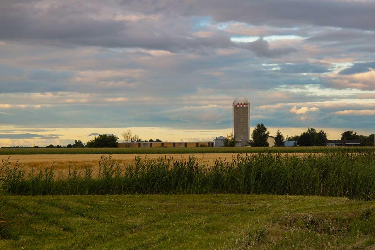 Champ de blé et champ de maïs et ferme avec un silo en arrière-plan