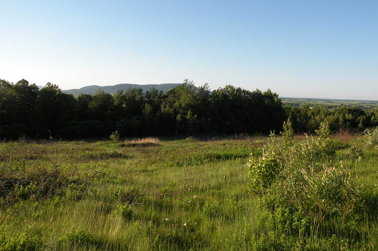 Prairie entourée de boisés en été, vue sur le mont Rougemont