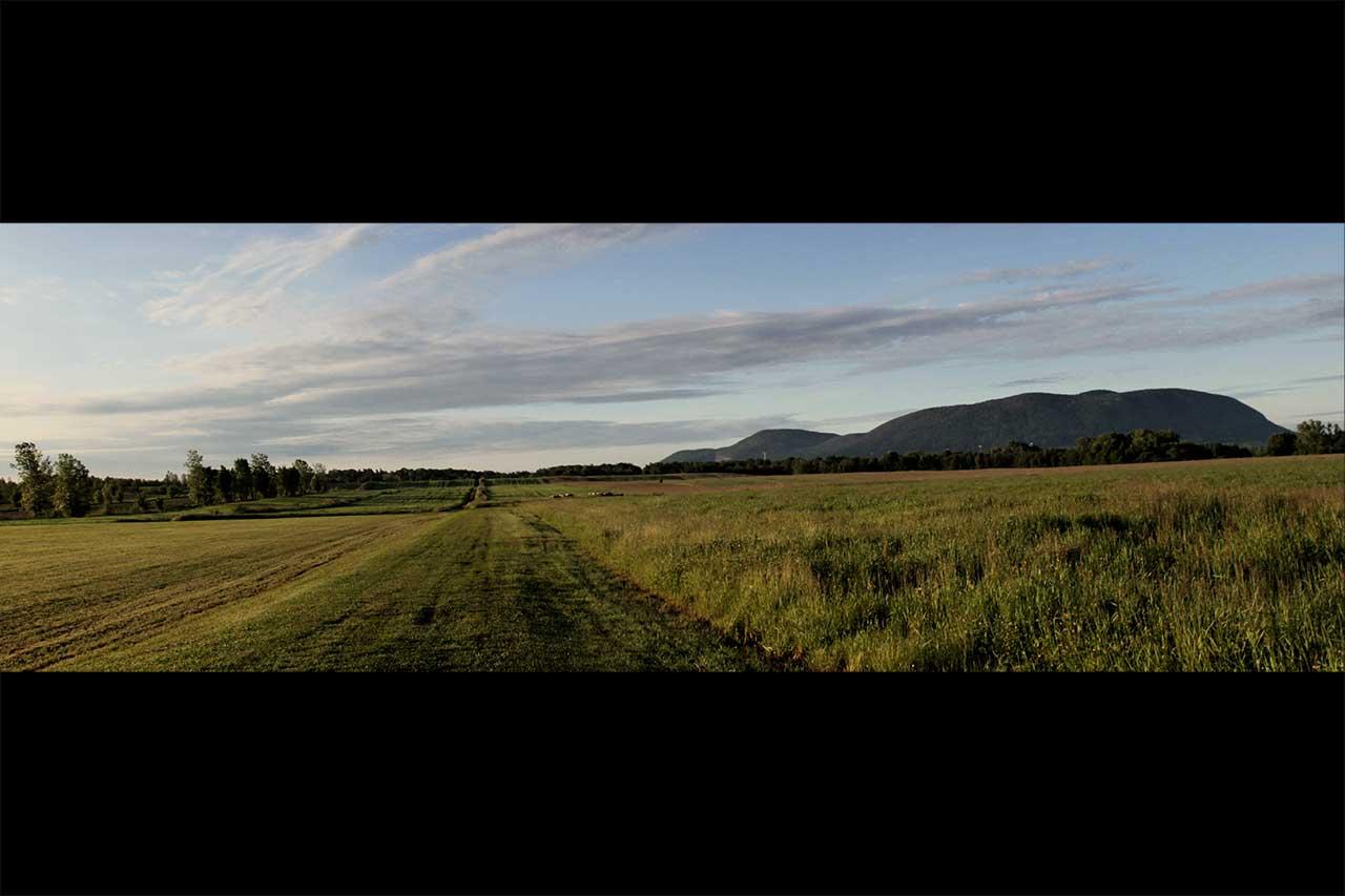 Paysage de champs agricoles fauchés et non fauchés, vue sur le mont Saint-Hilaire