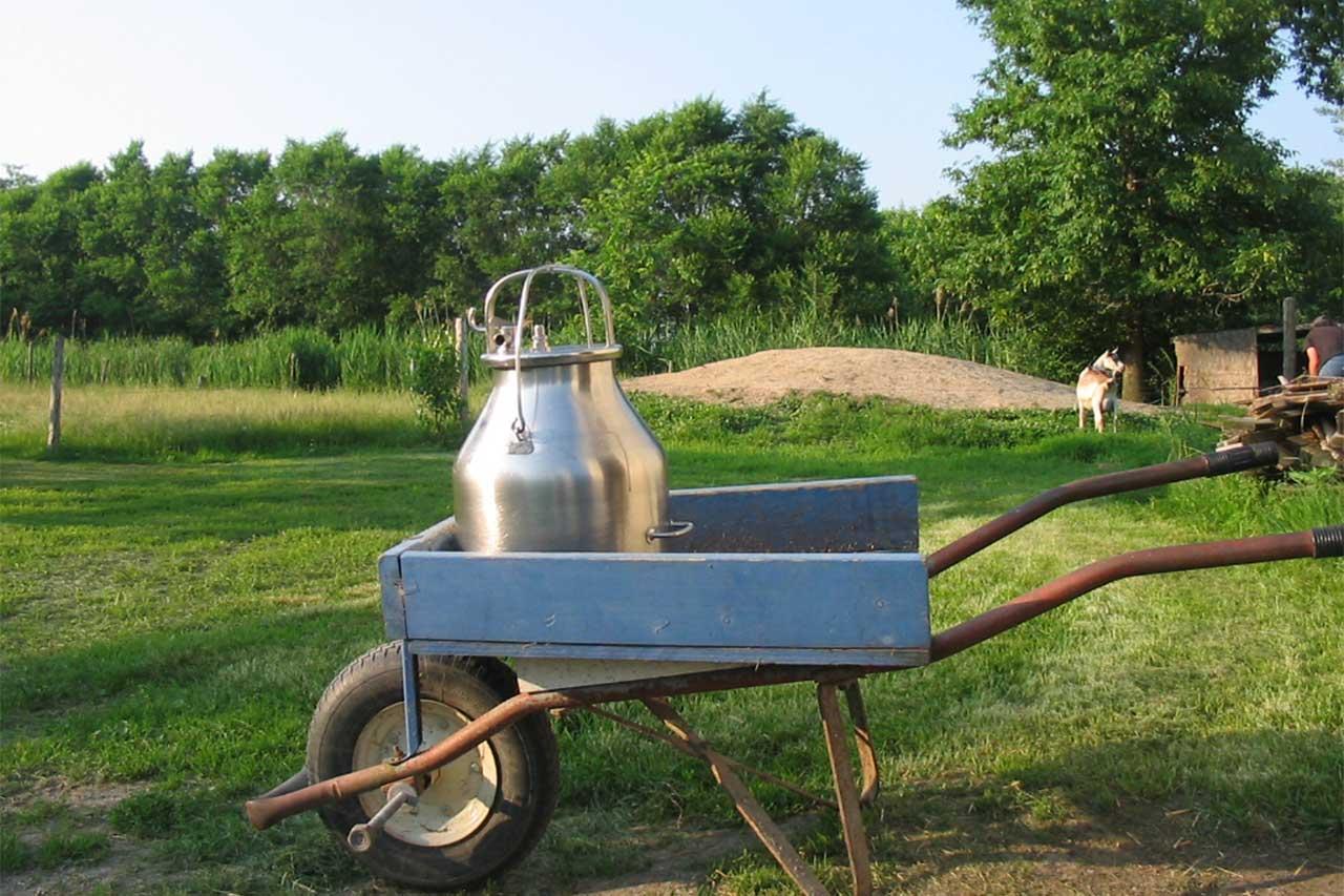 Brouette bleue en bois dans laquelle se trouve un grand pot à lait, une chèvre est dans la pâture entourée de boisés en été