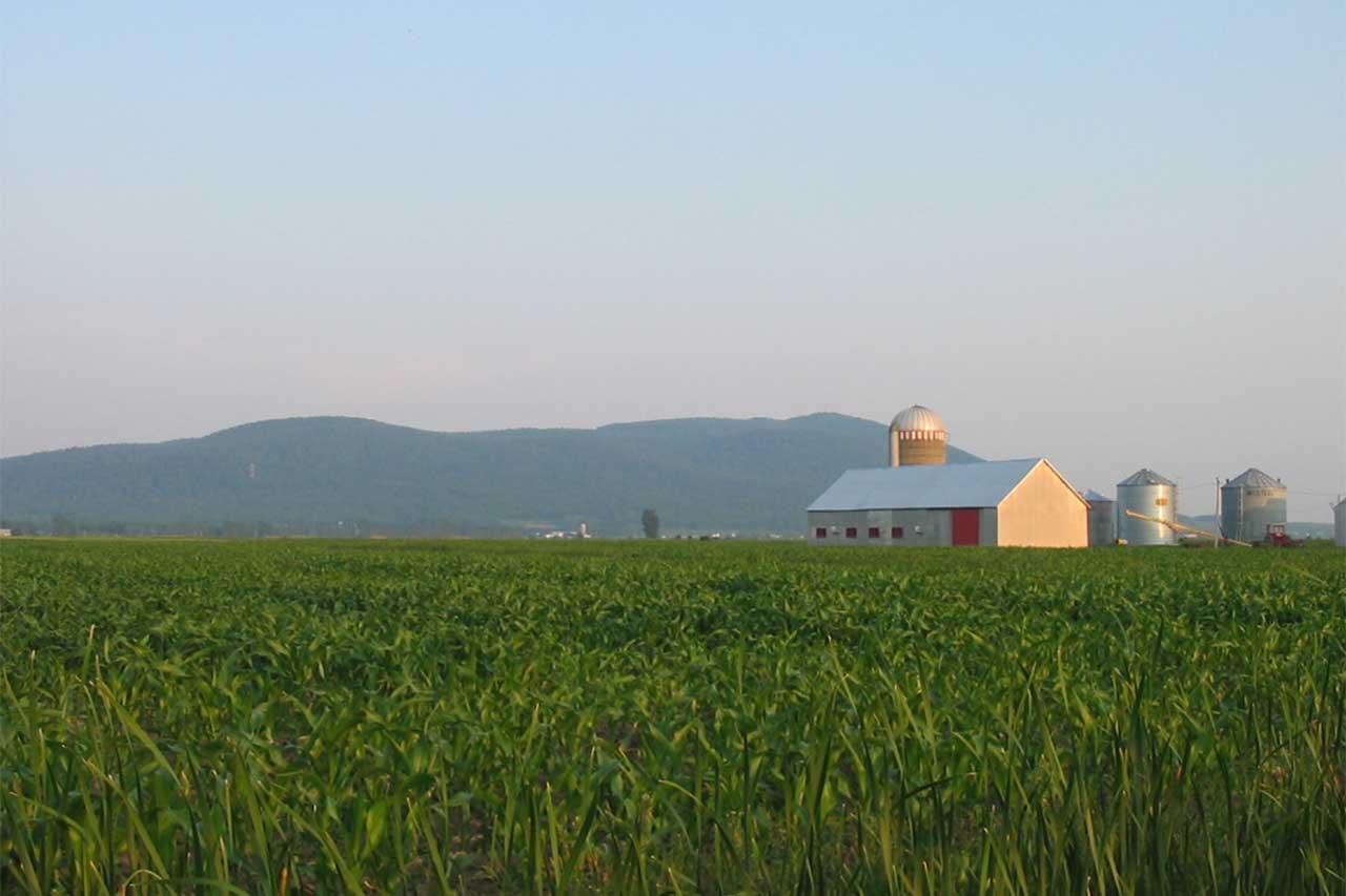 Champ de soya, grange et plusieurs silos. Le mont Saint-Hilaire est aperçu en arrière-plan