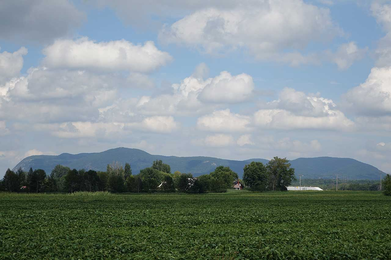 Field of soybeans, houses in the woods, and Mont Saint-Hilaire in the background