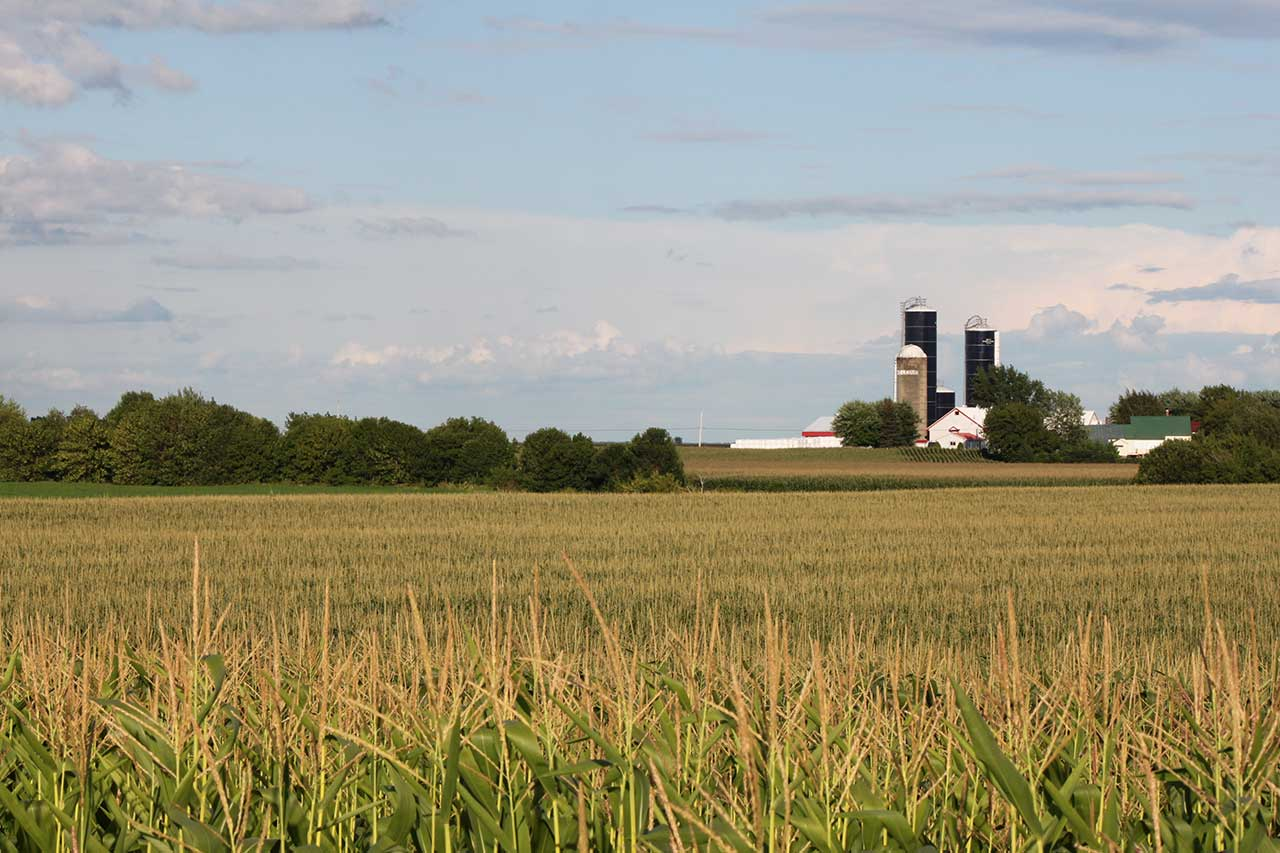 Champ de maïs et ferme avec silos en arrière-plan