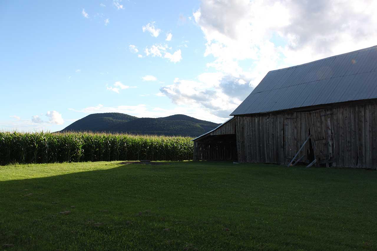 Grange en bois sur un terrain de gazon tondu attenant à un champ de maïs, vue sur le mont Saint-Hilaire