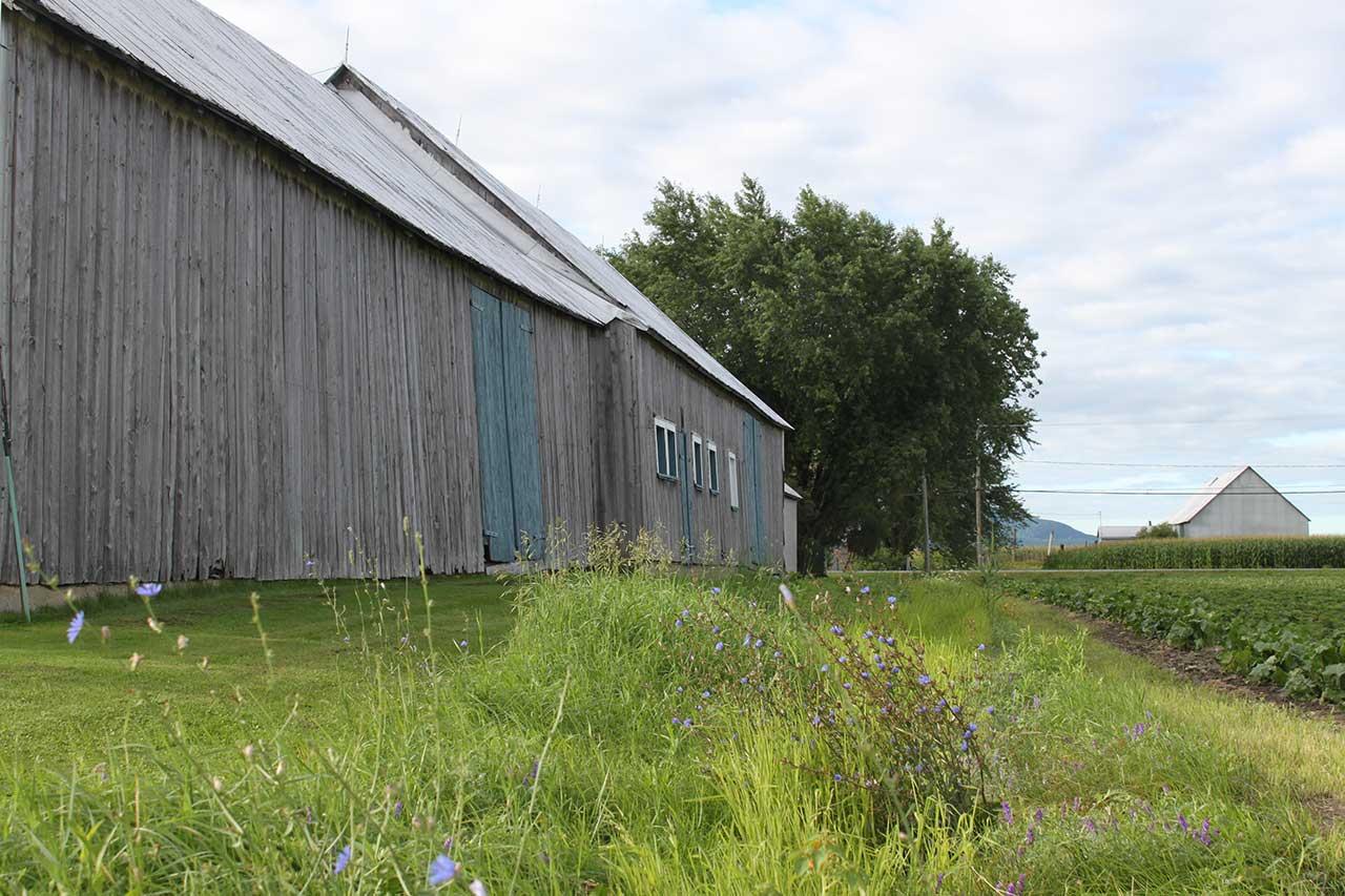 Grande grange en bois aux portes bleues sur un terrain de gazon tondu, bande riveraine fleurie faisant la séparation avec le champ voisin