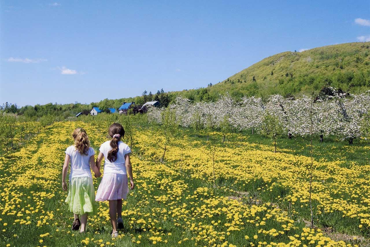 Deux petites filles de dos se tenant la main dans une prairie fleurie de fleurs jaunes au milieu des pommiers en fleurs