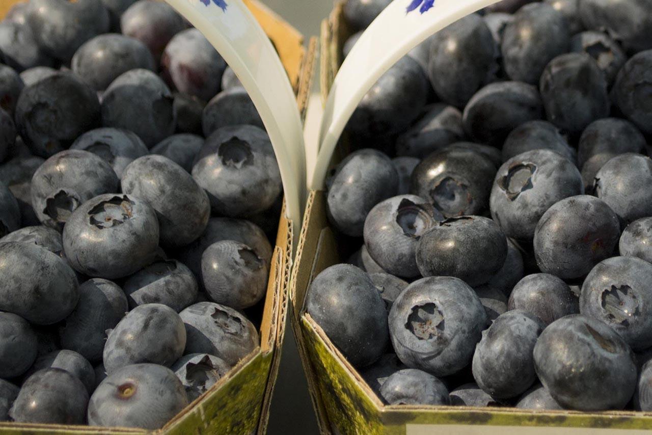 Blueberries in cardboard baskets